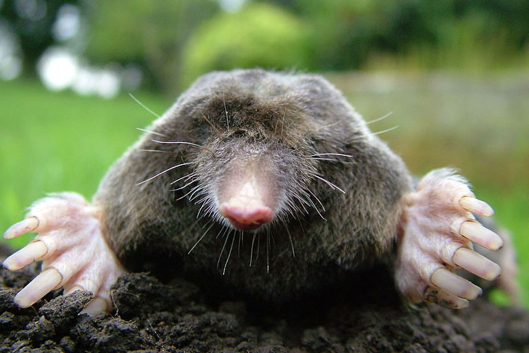Mole Catcher Lincolnshire